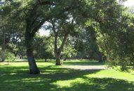 flood-park-woodland1